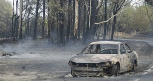 October's bushfires devastated the Blue Mountains region of New South Wales