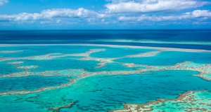 Australia Great Barrier Reef. Photo: Google Images.
