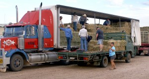 Transfer of the hay begins from the road train to local farm vehicles in Longreach. Photo by Jenny and Peter Coombes